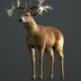 Deer Game Model