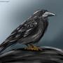 Raven by Maszrum