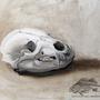 Lowly Bear Skull by ShadowElite951