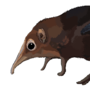 Giant Elephant Shrew!