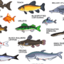 Upstream Game Fish Poster