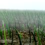 Guardian Grass by bluemagma