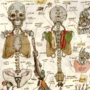 Anatomy 1: Skeleton