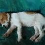 Dog by radiodark