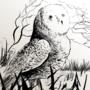 Hopeful owl 22/02/21