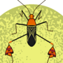 Anisoscelis Flavolineata (Leaf leg bug)