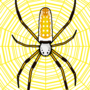 Nephila Clavipes (Gold Silk Orb Spider)