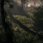 Realtime Forest