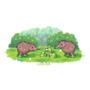 Kiwi and kiwi