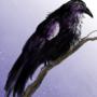 Raven digital 02/04/21