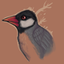 Java Sparrow by FRINDLE
