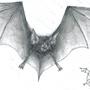 Bat by mega-supreme