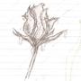 Rose by benjamin050389