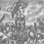 God of War- Kratos by lycaru