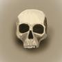 Skull by BrainworkInProgress