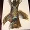 Ringed Necked Pheasant