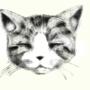 cat by xXmykittyXx