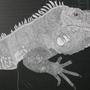 Iguana Scratchboard