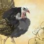It be a Turkey by ZaneZansorrow