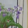 5/29/2021: Flowers