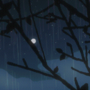 from my window (rain)