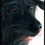 Pampouniou (my dog)(Painting) by Ephyse