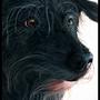 Pampouniou (my dog)(Painting)