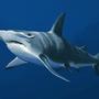 Hammerhead shark by J-qb
