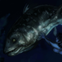 Coelacanth Creep