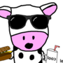 Cow eating hamburger drink milk with cool sunglasses