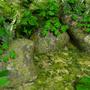 Piece of Swamp by Wahn-Studios