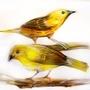 Birds by daigonite
