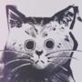 smushy kat