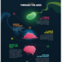 Evolution of the Human Brain by BoMbLu