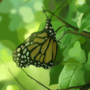 1 hour butterfly study