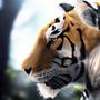Calm Tiger