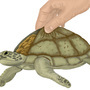 Tacurtle! (Tacortuga) by HugoVRB