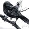 Crow and Cardinal