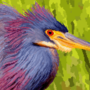Tricolored heron (344x400px)