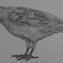 Crow Hatched by UndeadCrow