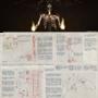 Element Explained: Skeletons by Bentusi-Paladin