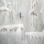 Jack Frost Rise by Zakuga