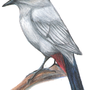 Gray Catbird 2 by daigonite