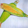 corn- pencil color on paper