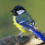 Bird by Stuga
