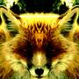 Fox by 00Nick00