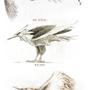 Pokémon legendary birds