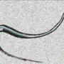 Sandswirl