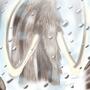 Mist Mammoth
