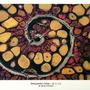 Anglerfish Ovary by Sabtastic